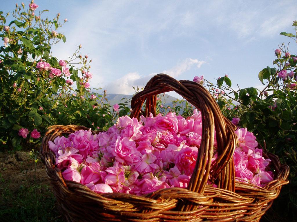 vallee-roses-maroc